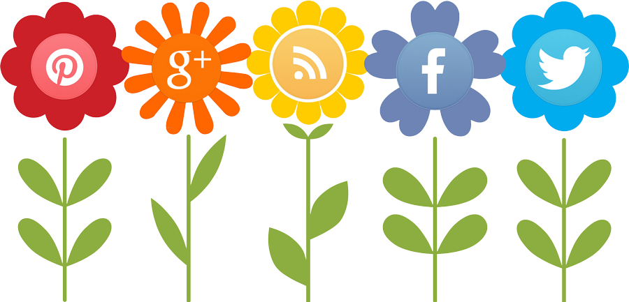 Social Media User Growth
