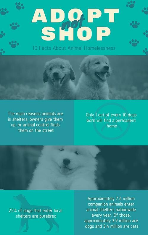 Dog Infographic_blog
