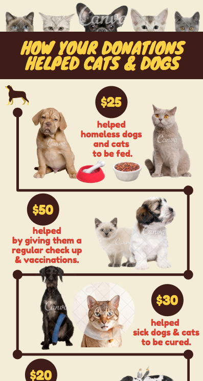 How your Donations Helped Cats & Dogs