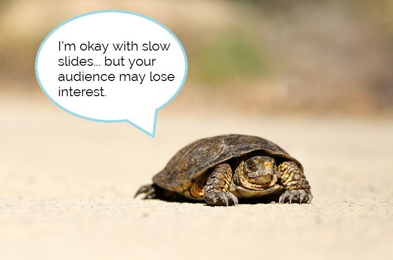 Slow turtle caption.jpg