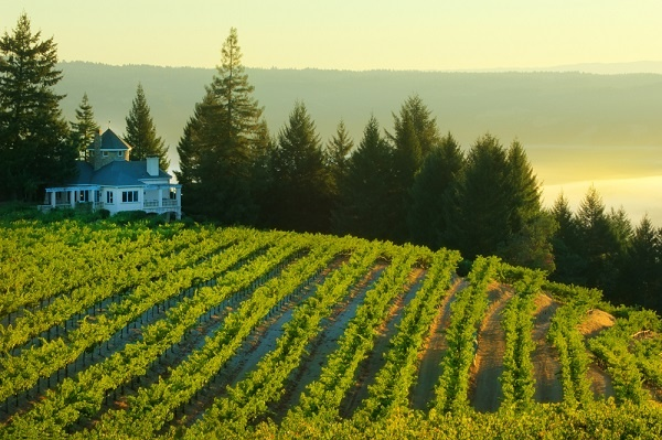 Wine country auction travel packages