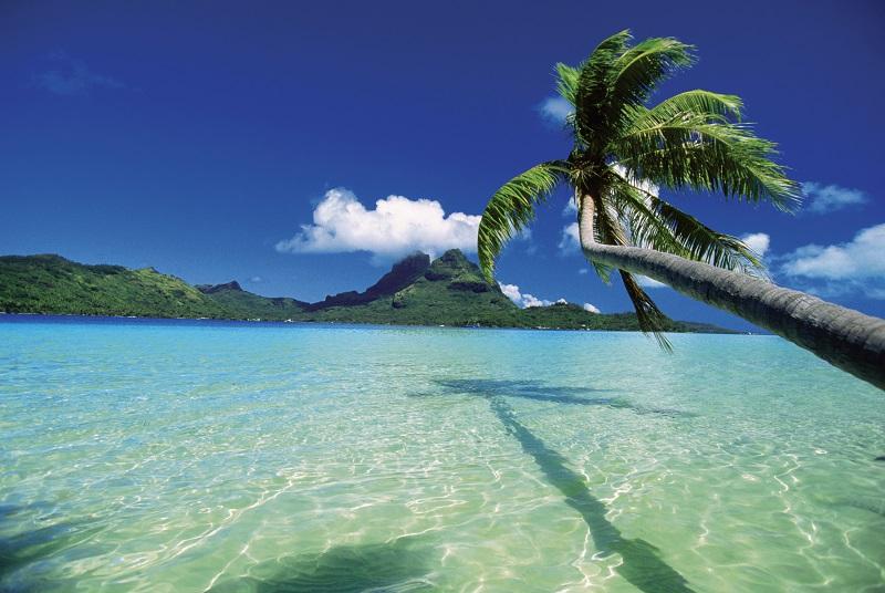 tropic island long palm tree.jpg